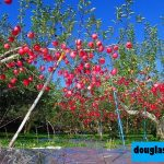9 Kebun Apel Terbaik di Arizona